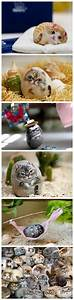 Steine Bemalen Katze : gatichus katzen pinterest steine steine bemalen und steinmalerei ~ Watch28wear.com Haus und Dekorationen