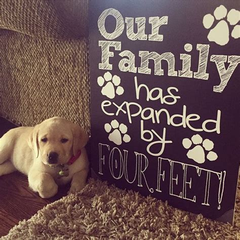 New Puppy Announcement  Personalized Our Family Has. Naval Academy Graduates List. Free Pleading Paper Template. Tee Shirt Template Psd. Graduation Dresses For College. Nursing Flow Sheet Template. Channel Banner Template. Superhero Invitation Template Free. Vehicle Inspection Checklist Template
