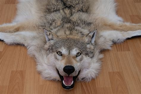Siberian Gray Wolf Taxidermy Rug Mount With Head Grey