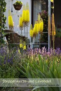 Mediterrane Pflanzen Liste : gartenblog zu gartenplanung gartendesign und ~ Watch28wear.com Haus und Dekorationen
