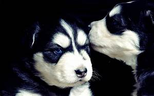 Adorable Puppies - Puppies Wallpaper (22289982) - Fanpop