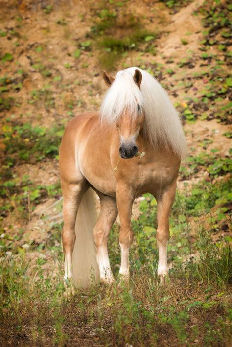 die besten  ideen zu pferdebilder auf pinterest