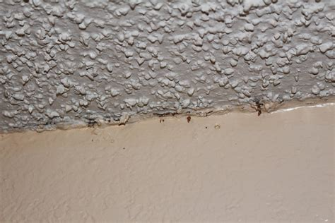 100 how to remove popcorn ceiling turtles and tails