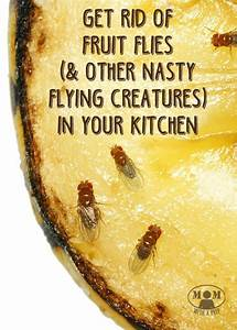 how to rid of annoying fruit flies and gnats in the With how to get rid of gnats in your bathroom