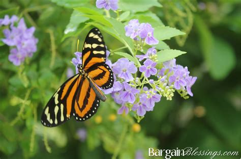 85876 Westminster Butterfly Pavilion Coupon by Butterfly Pavilion In Westminster Colorado Magical