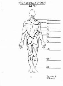 8  5th Grade Muscular System Worksheet