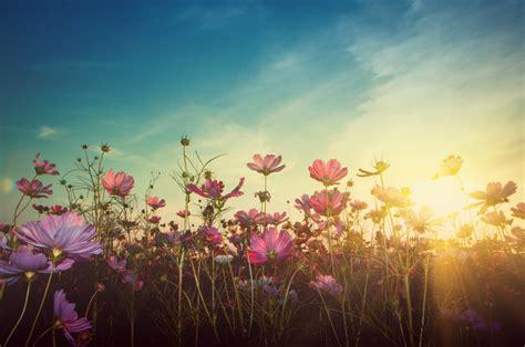 Rêver de fleurs : 10 rêves et leurs significations