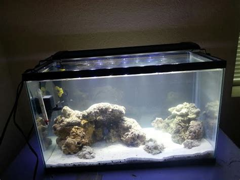 Aquascape Live Rock by Reef Tank Live Rock Aquascape Tank Nano Reef