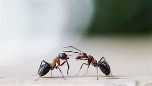 Ameisennest Im Haus : ameisen unter der lupe ~ Markanthonyermac.com Haus und Dekorationen