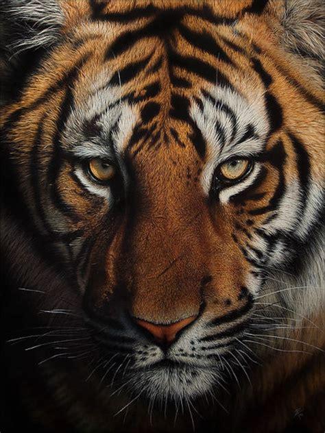 stunning life  animal drawings  pics izismilecom
