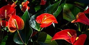 Anthurie Im Wasser : pflanzen f rs bad gesucht die 12 besten badpflanzen ~ Yasmunasinghe.com Haus und Dekorationen