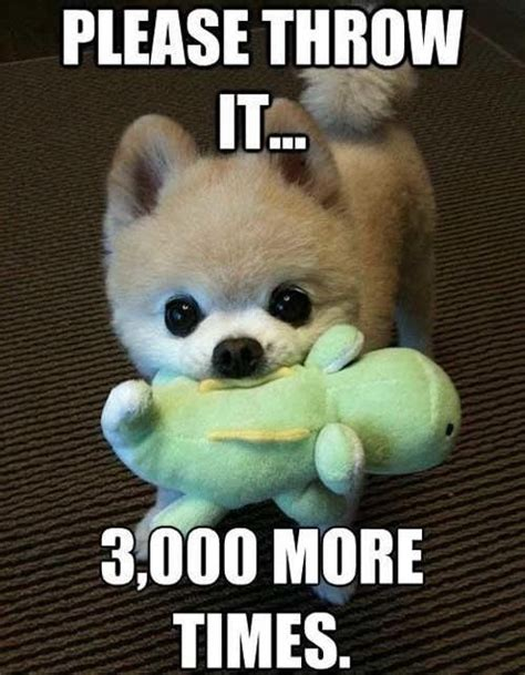 Adorable Animal Memes - too cute for words via watchfulowls petsitters dog love pinterest more meme and dog ideas