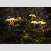 magical-forest-mushrooms