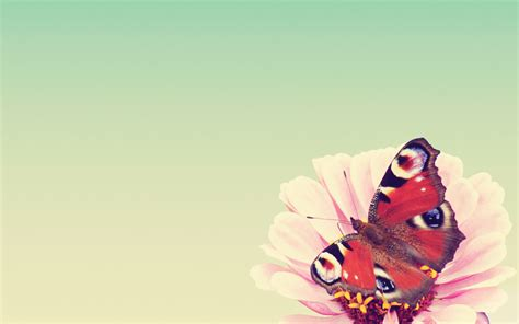 Freebie Desktop Schmetterling Wallpaper