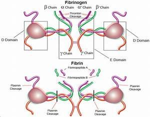 Analytical Enzymes Fibrinogen & Fibrin | Sigma-Aldrich