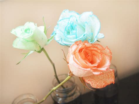 white food coloring how to dye white roses with food coloring 8 steps with
