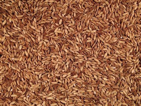 Organic Ancient Grain eBarley   Grain Place Foods