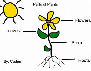 Labeling Parts Of Plants