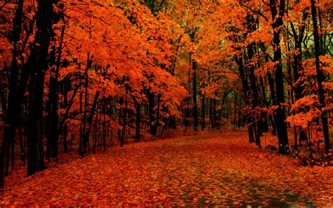 Autumn Wallpapers For Mac by Fall Path Mac Wallpaper Allmacwallpaper