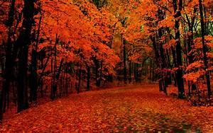 Fall Path Mac Wallpaper Download | Free Mac Wallpapers ...  Fall