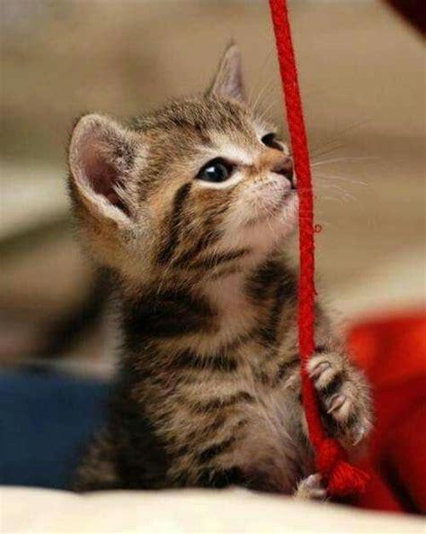 cute kittens images  pinterest