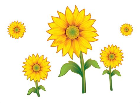 sunflower clipart bunga matahari pencil   color