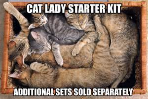 cat starter kit cat starter pack memes