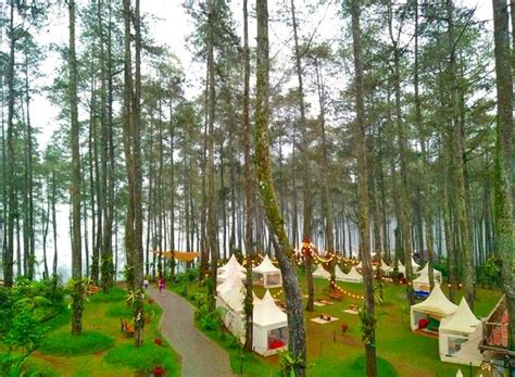 orchid forest tempat wisata alam  lembang nchiehaniecom