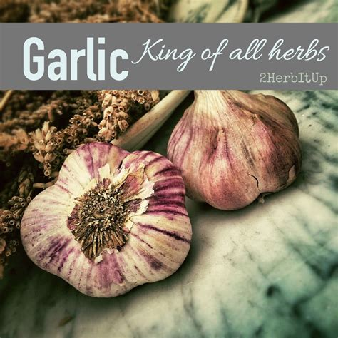 Properties Compounds Uses And Preparations Of Garlic