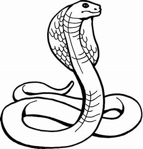 King Cobra Drawing - ClipArt Best
