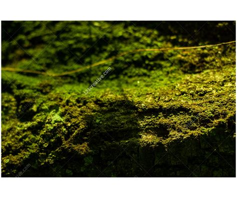 Free Nature Backgrounds by Free Abstract Forest Backgrounds Green Textures