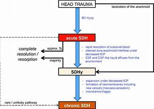 Meaning Of Subdural Hematoma