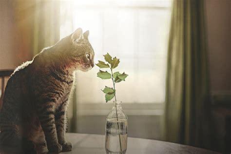 amazing  life photography ideas