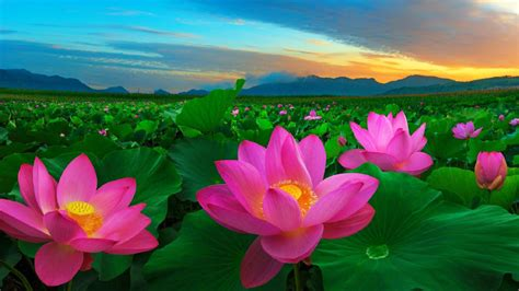 Flower Pictures Pink Flowers And Green Leaves Traditional ...