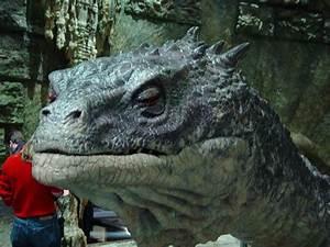 Harry Potter Basilisk Skeleton | www.pixshark.com - Images ...