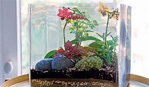 Acheter Terrarium Plante : conseils diy terrarium plantes vertes et fleuries jardinerie truffaut conseils plantes vertes ~ Teatrodelosmanantiales.com Idées de Décoration
