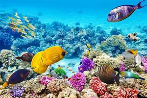 Great Barrier Reef, The Largest Coral Reef Tourism in The ...