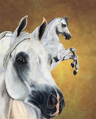 Arabian Horse Drawings Realistic