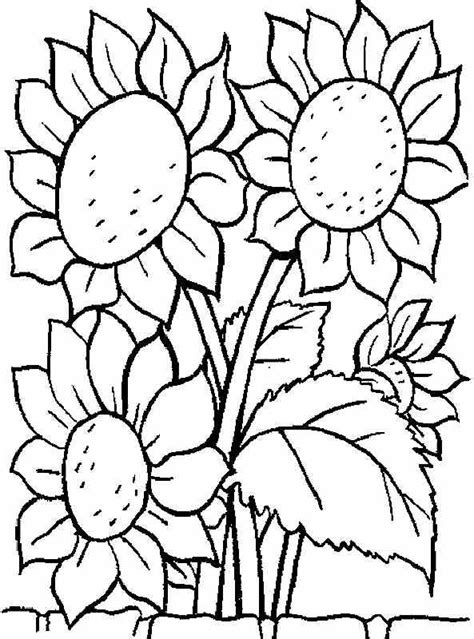 printable coloring pages sunflower flowers  kids