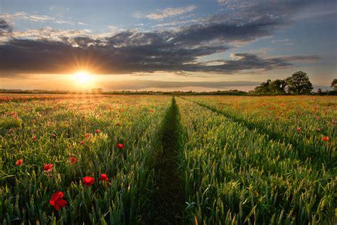 poppy field bryan hanna irish landscape photography