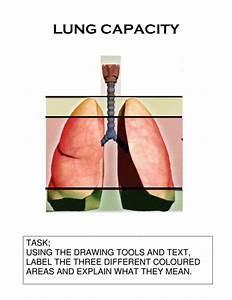 Respiratory System By Ilovepe - Teaching Resources