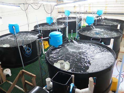technical workshop recirculating aquaculture systems
