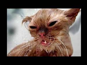 TOP 5 UGLIEST CATS IN THE WORLD - YouTube