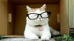 Cat Glasses GIF - Find & Share on GIPHY
