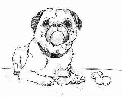 Dog Drawing Pug Draw Drawings Inspiration Anime