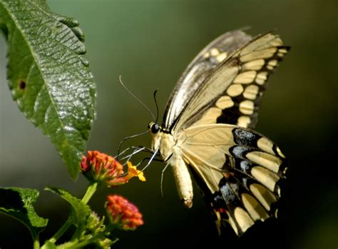 Animated Butterfly Wallpaper - sweet and animals animated butterfly wallpaper