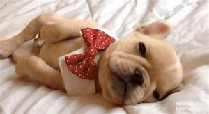 Tired Puppies GIFs - Find & Share on GIPHY