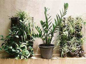 5, House, Plants, That, Improve, The, Air, Quality, Of, Your, Home