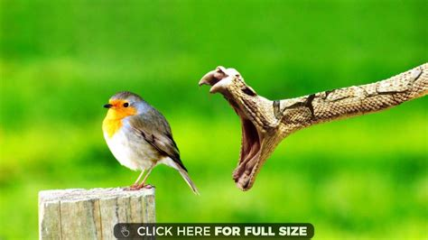 Animal And Bird Hd Wallpaper - snake wallpapers photos and desktop backgrounds up to 8k