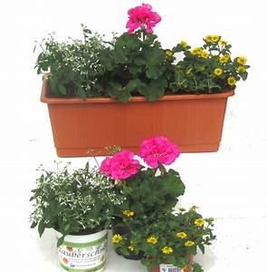 Balkonkästen Winterhart Bepflanzen : balkonpflanzen set f r balkonk sten 40 60 cm lang sommer ~ Lizthompson.info Haus und Dekorationen